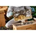 SE Vækstpulje-midler sikrer at skolebørn ikke bliver stukket af bier