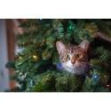 Se upp för julens faror – så djursäkrar du ditt hem