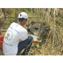Nach Zyklon Fani in Odisha (Indien): Umfangreiche Tiernothilfe in stark betroffenen Gebieten gestartet