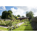 Vi firar Sara-dagen samt 10 års-jubieum för trädgården vid Linnés bröllopsstuga