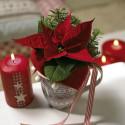 Julstjärnans dag - 12 december - vinn presentkort att handla julstjärnor för!