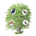 Invigning av Dalslands första symbolträd den 19 februari