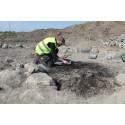 Stormannagrav från järnålder undersöks i Uppsala