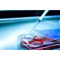 Idogen har beviljats ett patent i USA för sin immunterapiteknologi