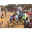 In Malawi sind vor allem Kinder für die Betreuung von  Haustieren zuständig – und deshalb besonders oft von Tollwut betroffen.