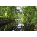 Nytt naturreservat vid Motala ströms ravin