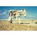Krisen i Libyen hotar livsmedelsförsörjningen