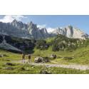Die Region Wilder Kaiser will das stärkste Wanderangebot der Alpen