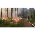 Dags för naturvårdsbränning i naturreservatet Kittelfältet