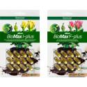 Låt BioMax Allium I-Plus och Allium F-Plus ta striden mot skadeinsekter och svampsjukdomar i trädgården