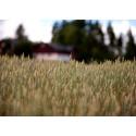 Torkan ger fortsatt stora konsekvenser för lantbruksföretagens lönsamhet