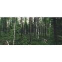 Consid tecknar nytt ramavtal med Skogsstyrelsen