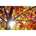 Solskinn i høstfarger