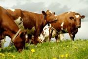 Landbruksbedriftene forlenger mediebyråsamarbeid