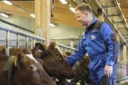 Tidlig innhøsting av gras skal gjøre kua mer klimavennlig