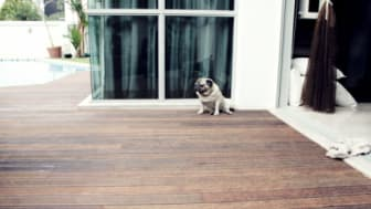 Decking ~ All You Need to Know