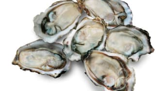 Shellfish producer moves into former Dawnfresh factory