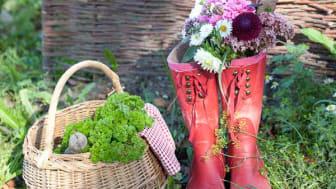 Säsongsinspiration augusti  - högtid för sommarastrar och vackra prydnadsgräs