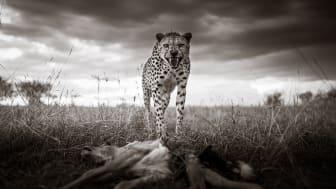 © Graeme Purdy, United Kingdom, Finalist, Professional competition, Wildlife _ Nature, Sony World Photography Awards 2021_6