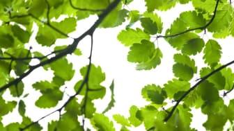 Örebro kommun tar ytterligare ett kliv framåt i klimatarbetet