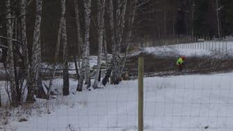 Cirka 120 björkar togs ner i Järva DiscGolfPark under onsdagen. Ytterligare över 2000 träd står i tur att fällas för att anlägga två stora reningsdammar som ännu inte fått marklov.