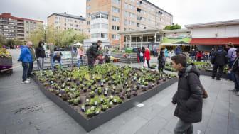 Nya planteringar - av och för Hjällboborna på torget.