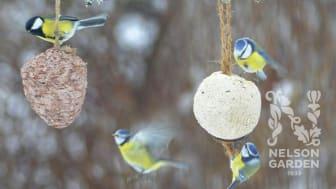 Intresset för att mata fåglarna växer – Fågelmatsnyheter 2021 från Nelson Garden