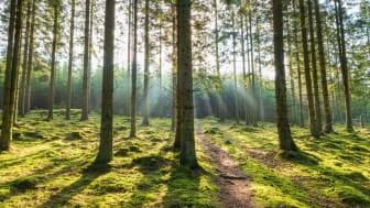 Vandringsled med poesipauser i Säterdalens naturreservat