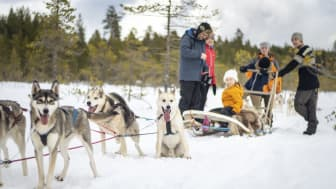 Hundspann i Dalarna. Foto: Visit Dalarna