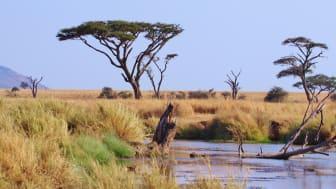 Ny forsknings konkluderer at en-tredjedel af tropiske afrikanske planter er ved at uddø, hvilket vil have alvorlige konsekvenser for biodiversiteten.