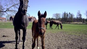 Att vara kund hos ATG är att älska hästar