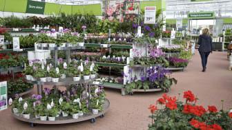 På torsdag öppnar Blomsterlandet i Arninge. Det blir växtkedjans 62:a butik i landet. (Vänligen notera att fotot är från en annan butik.)