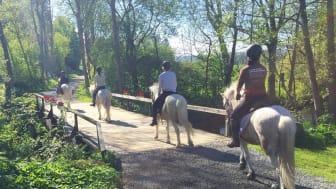 Upplevelser för alla i hästens tecken erbjuder Hästrundan Österlen med vänner.