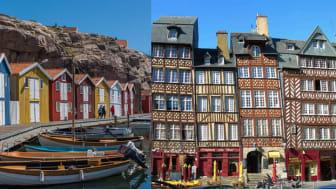 Bohuslän har bättre ostron än Bretagne
