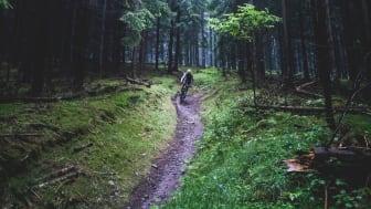 """Treibjagd im Dunkelwald"" (Foto: Christoph Grunwald)"