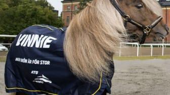 Mediefenomenet Vinnie, den lilla ponnyn i ATG-reklamen, kommer till EuroHorse