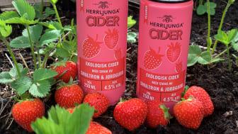 Herrljunga Cider Smultron & Jordgubb –  En söt cider med smak av sommar!