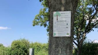 Vi uppmärksammar träden i staden och sprider kunskap om den stora nyttan de gör.