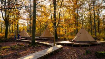 Camp Oak är slående vackert i höstskrud. Nu kan Skånes Djurparks besökare sova över mitt i den färgsprakande skogen.
