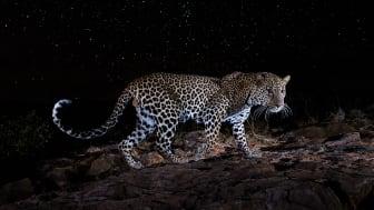 © Will Burrard-Lucas, United Kingdom, Shortlist, Professional competition, Wildlife _ Nature, Sony World Photography Awards 2021_4.jpg
