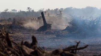 Politiske reaktioner på Verdens Skoves rapport om skovrydning, som følge af sojadyrkning til svinefoder får stærke politiske reaktioner. Foto: Jim Wickens, Ecostorm via Mighty Earth