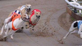 Sveriges snabbaste hundar gör upp i Borås
