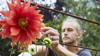 Glapp mellan behov och befintliga stöd för sociala entreprenörer