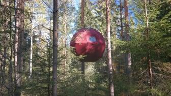 """Övernatta bland trädtopparna i skogskojan """"Supermåne"""" hos Näsets Marcusgård i Furudal, Dalarna."""
