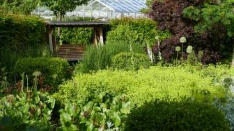 Alnarps rehabiliteringsträdgård är som vackrast i försommarflor. Foto: Marianne Persson, SLU