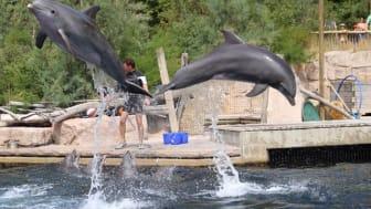 Umstrittene Delfinhaltung im Tiergarten Nürnberg (Foto WDSF)