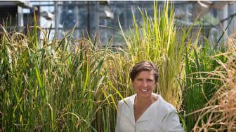 Professor Pamela Ronald, en av SLU:s nya hedersdoktorer. Foto: Deanne Fitzmaurice