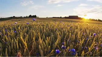 Bönder fortsätter ställa om till KRAV