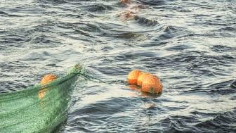 Nya regler gör det lättare för yngre att bli yrkesfiskare