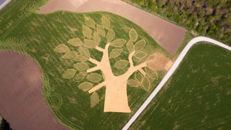 """Den nye skov ved Ølsted kaldes en undervisningsskov og består af 3.000 træer - der er plantet 100 træer i hvert stort """"blad""""."""